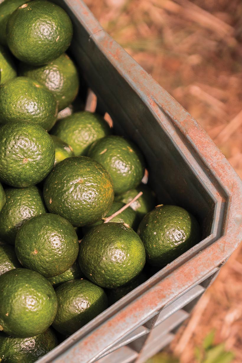 utilizările uleiului esențial de mandarin verde